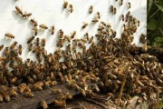 Swarm of bees chase car for over 24 hours to rescue their queen