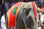 Asia's 'granny' elephant likely to enter Guinness Book at 86