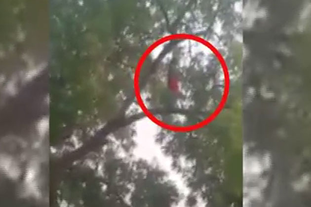 Video of woman offering namaz on a tree branch goes viral