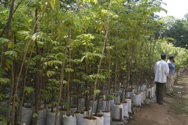 Ten lakh saplings planned to be planted this monsoon by NDMC