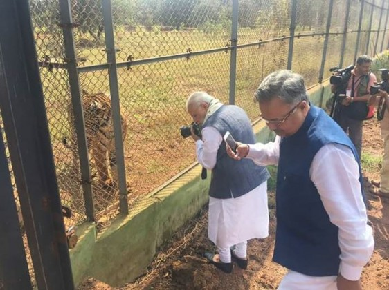 The prime minister was photographed taking pictures of the Royal Bengal Tiger at the Jungle Safari in Raipur.